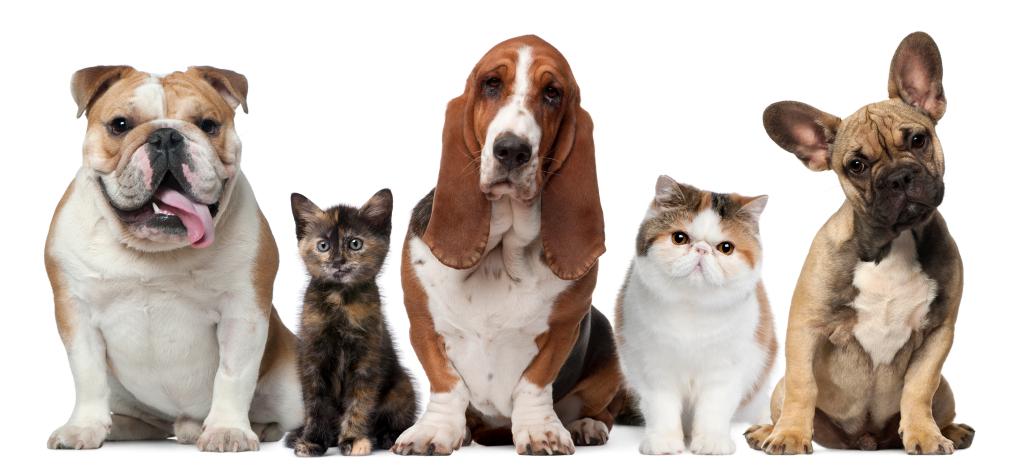 Murray and Lamb - Pet Insurance