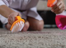 ukhi-Hire-A-Professional-Carpet-Cleaner-or-Buy-a-Steam-Cleaner