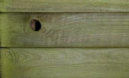 Mould on timber fence