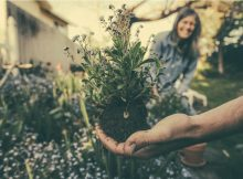 UK-home-improve-how-to-improve-a-new-garden