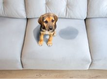 uk-home-improvement-Removing-Pet-Urine-Stains